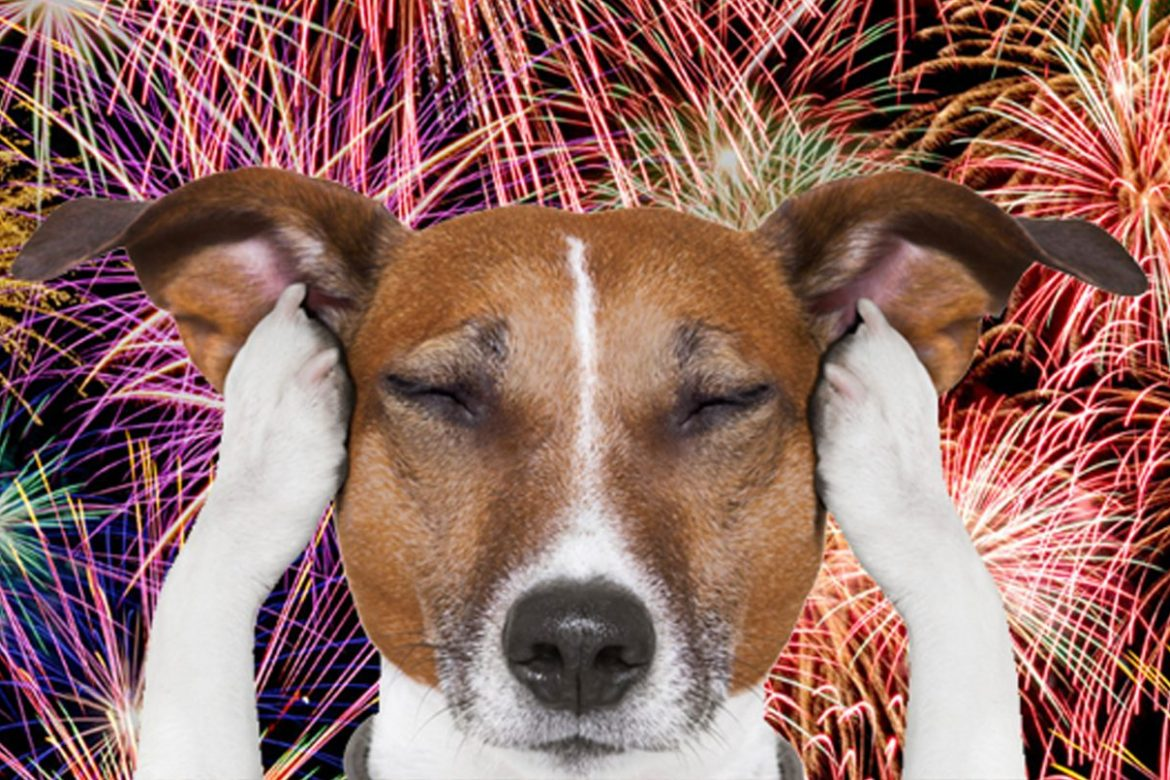 dogs have anxiety with fireworks