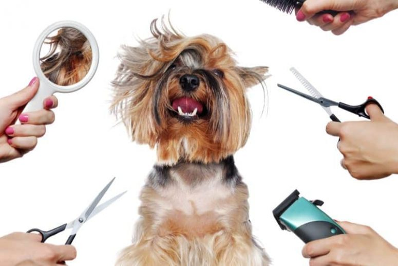 importance of grooming dogs